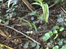 spiderweb Stockfoto