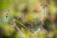 spiderweb Fotografie Stock Libere da Diritti
