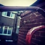 spiderweb Royalty-vrije Stock Afbeelding