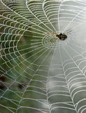 spiderweb Royaltyfri Bild