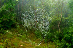 Spiderweb. Morning spiderweb with water drops Royalty Free Stock Photos