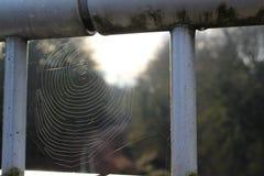 spiderweb stockfotografie