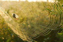 Spiderweb. Details of a spiderweb outlined with early morning dew Stock Image