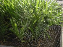 Spiderweb 2 Royalty Free Stock Photography