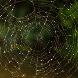 Spiderweb Stockbilder