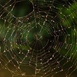 Spiderweb Images stock