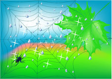 Spiderweb Fotografia Royalty Free