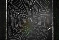 Spiderweb. In the forest between trees Royalty Free Stock Photos