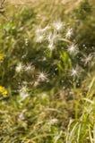 Spiderweb obrazy stock