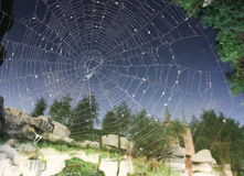 Spiderweb Στοκ Εικόνα