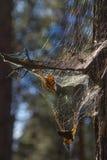 Spiderweb Lizenzfreies Stockbild