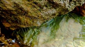 spiderweb Arkivbild