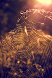 spiderweb Стоковое фото RF