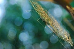 spiderweb Στοκ Φωτογραφίες