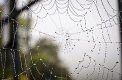 spiderweb Στοκ εικόνες με δικαίωμα ελεύθερης χρήσης