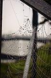 spiderweb stockbild