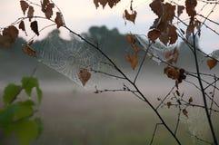 spiderweb Imagenes de archivo