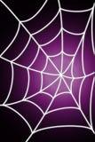 spiderweb 免版税库存图片