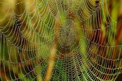 spiderweb Royaltyfria Bilder