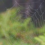 spiderweb Imagem de Stock Royalty Free