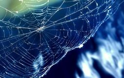 spiderweb Image stock