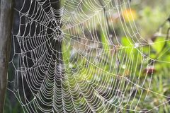 spiderweb Fotos de Stock Royalty Free