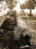 spiderweb стоковое изображение rf