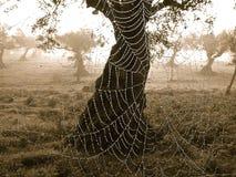 spiderweb Stock Afbeelding