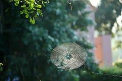 spiderweb Zdjęcie Royalty Free