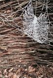spiderweb Stockbilder