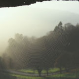 spiderweb Photo stock