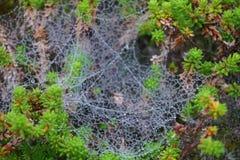 spiderweb Στοκ φωτογραφίες με δικαίωμα ελεύθερης χρήσης