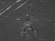 spiderweb Fotos de Stock