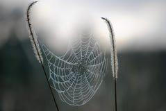 spiderweb arkivbilder