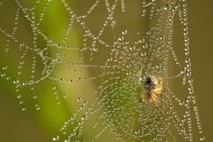 Spiderweb. Morning spiderweb with water drops Stock Photos