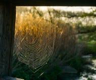 Spiderweb Abschluss oben lizenzfreie stockbilder