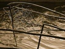 Spiderweb Royalty Free Stock Photo