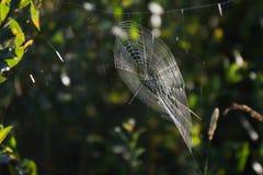 Spiderweb auf dem Gras Stockbilder