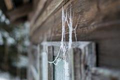 Spiderweb auf hölzernem Fenster lizenzfreies stockfoto