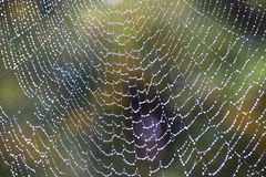 Spiderweb in autumn Stock Photography