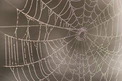 Spiderweb avec des gouttelettes d'eau Photos stock