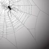 Spiderweb Background Royalty Free Stock Images