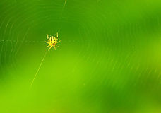 Spiderweb background Royalty Free Stock Photography