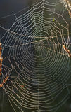 Spiderweb background Stock Image