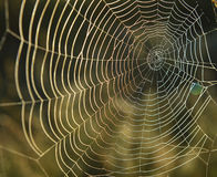 Spiderweb background Stock Photography