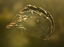 Spiderweb background Stock Photos