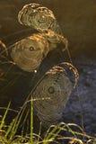 Spiderweb background Stock Image