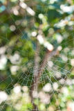 Spiderweb. Background on wood. Background Stock Photos