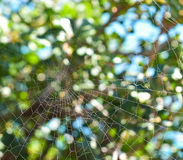 Spiderweb. Background on wood. Day Stock Photography
