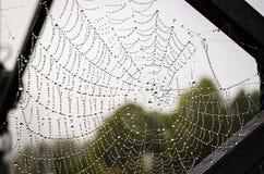 Spiderweb Stock Photography